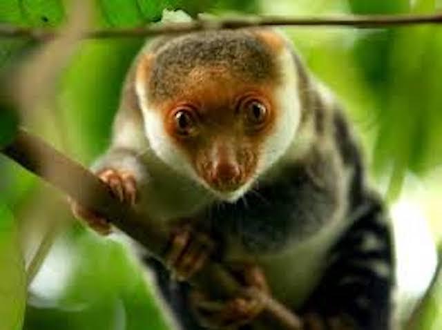 Źródło; rajaampatbiodiversity.com